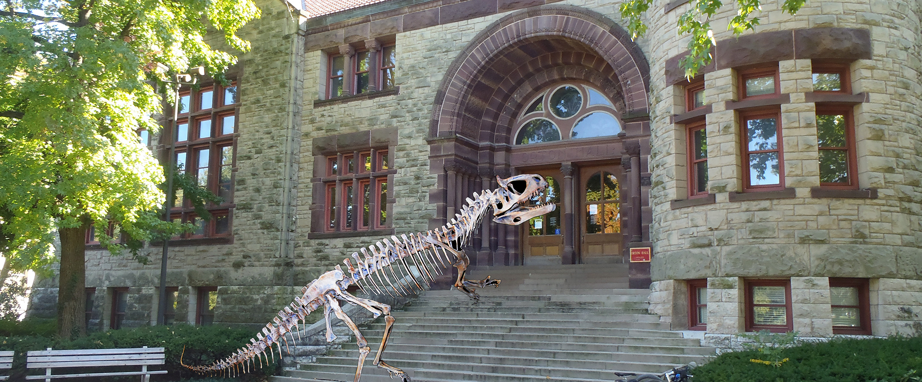 Orton's dinosaur skeleton walking up the Museum's front steps